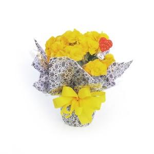 Begônia-Amarela-com-Emabalagem-Tradicional-1