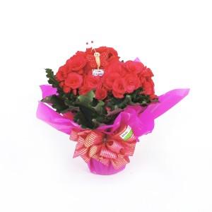Begônia-Rosa-com-Embalagem-Tradicional