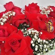 Buquê com 12 Rosas Importadas Vermelhas 4