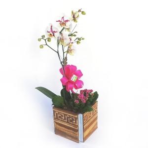 Orquídea-Phalaenopsis-com-2-Hastes-no-Cachepô-1