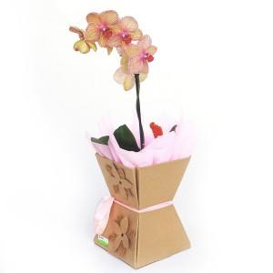 Orquídea-com-1-Haste-na-Emabalagem-Crafht