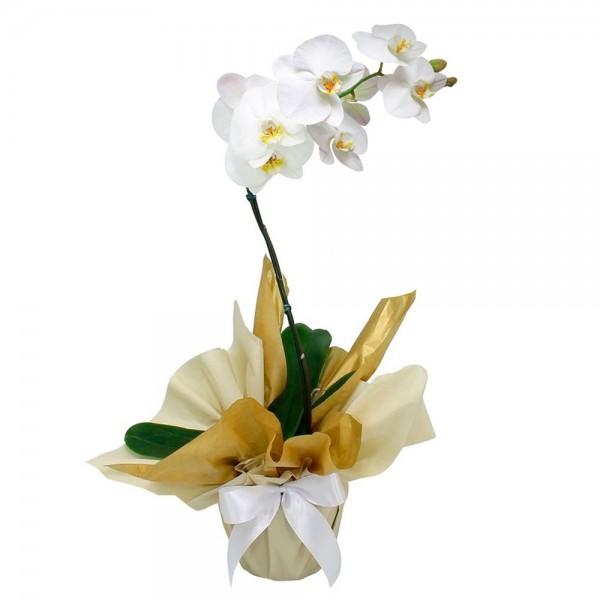 Orquídea Branca R$ 95,00