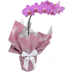 Orquídea Lilás R$ 95,00